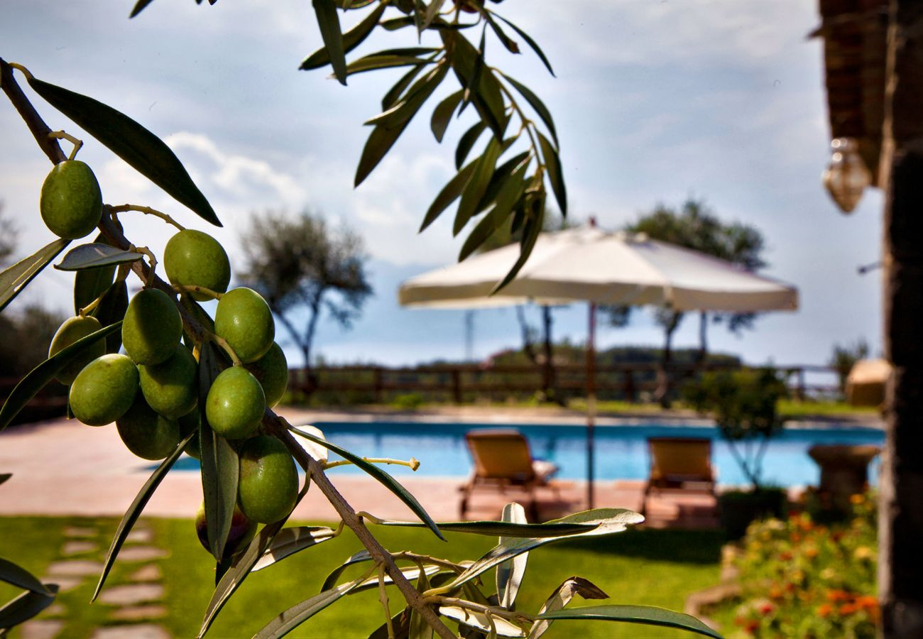 pool surrounded by olive trees, casale la torre, holiday apartments near sorrento, massa lubrense, italy