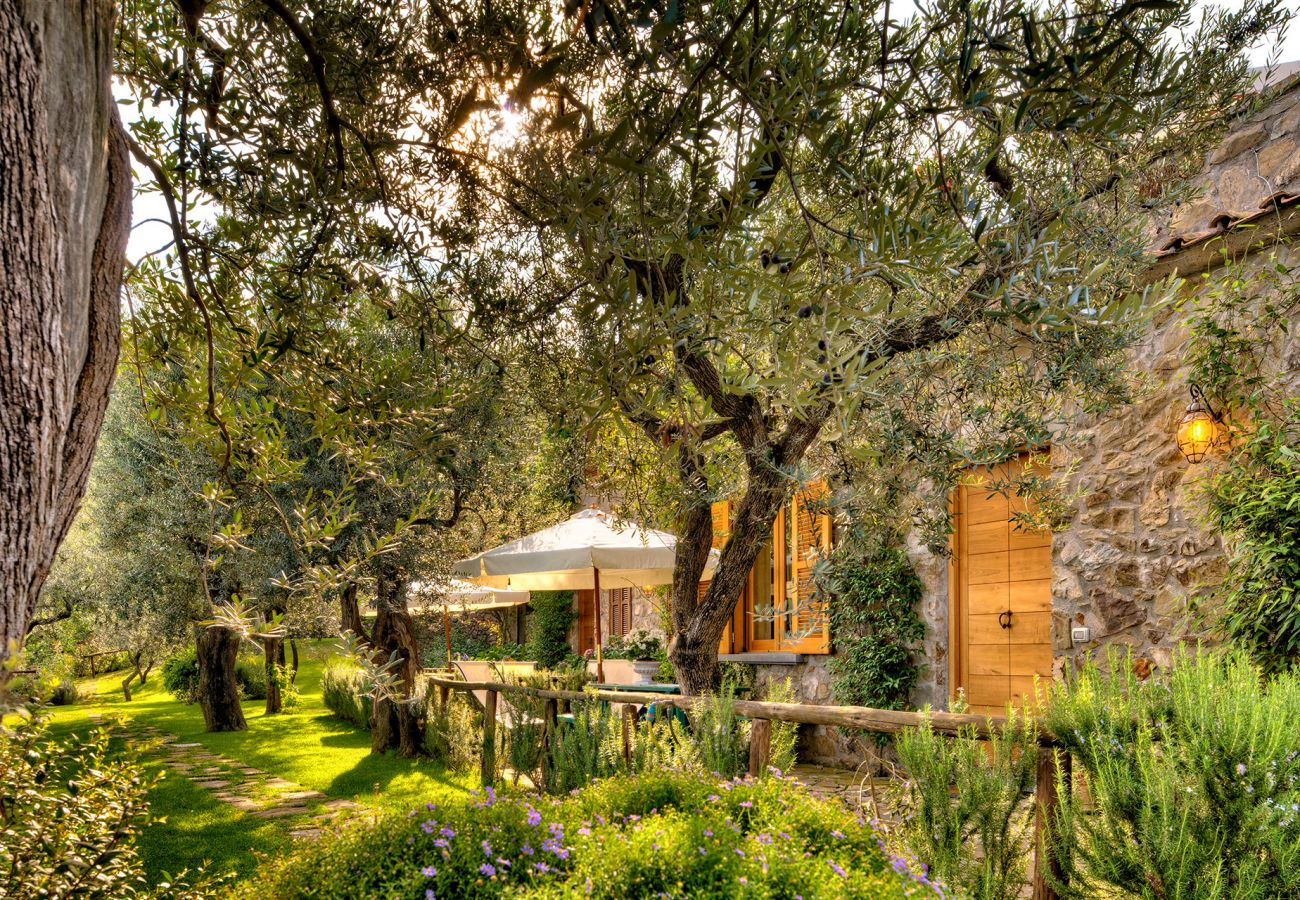 olive trees garden, casale la torre, holiday apartments near sorrento, massa lubrense, italy
