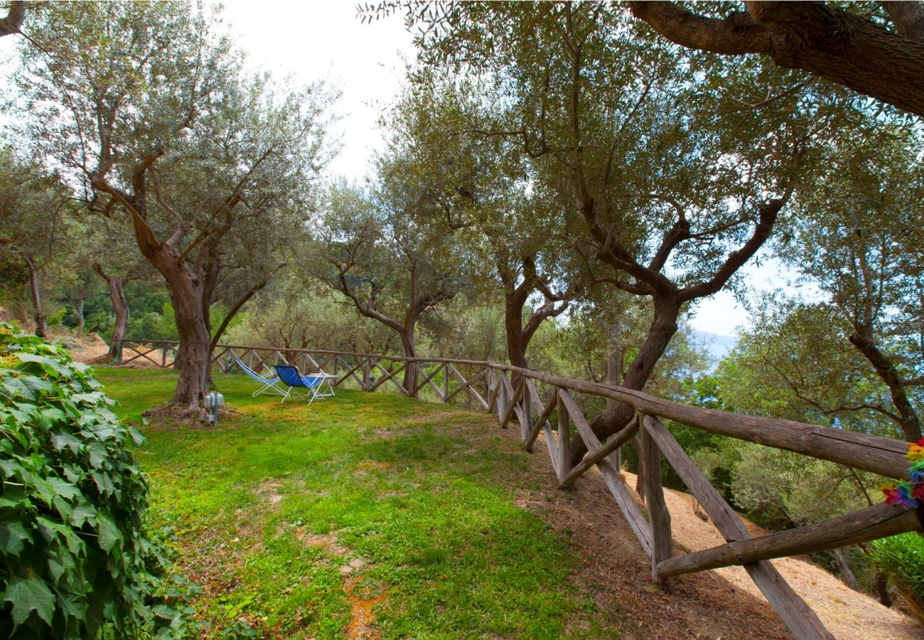garden with olives trees, holiday villa sterlizia, massa lubrense, italy
