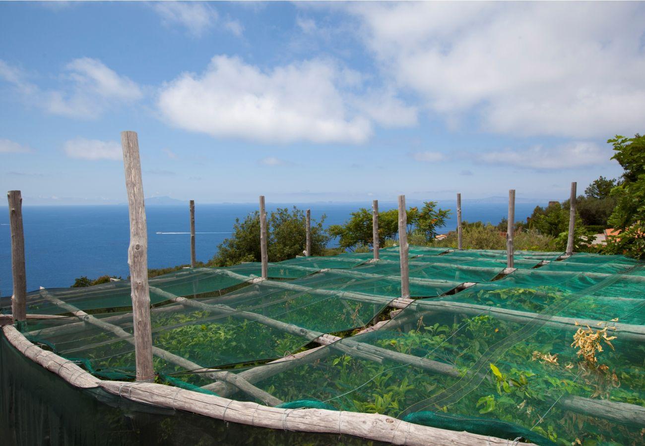 lemons nets view, holiday villa sterlizia, massa lubrense, italy