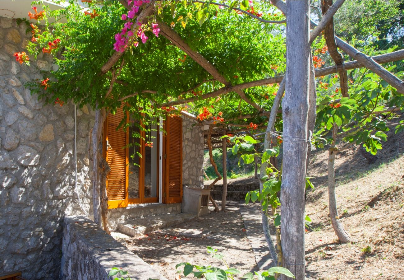 garden in sunny day, holiday villa sterlizia, massa lubrense, italy