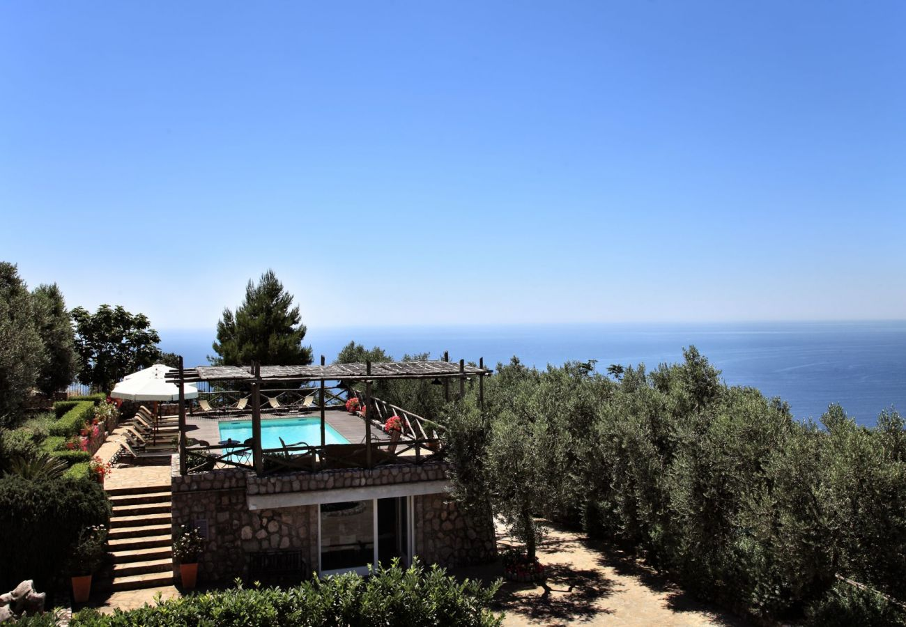 olive trees garden close to swimming pool, panoramic sea view, holiday apartment figaro, sant'agata sui due golfi, italy
