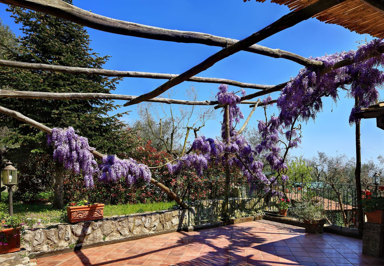 terrace with glicine flowers, during a sunny day