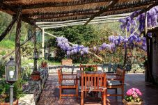 patio with glicine flowers, villa le birbe massa lubrense